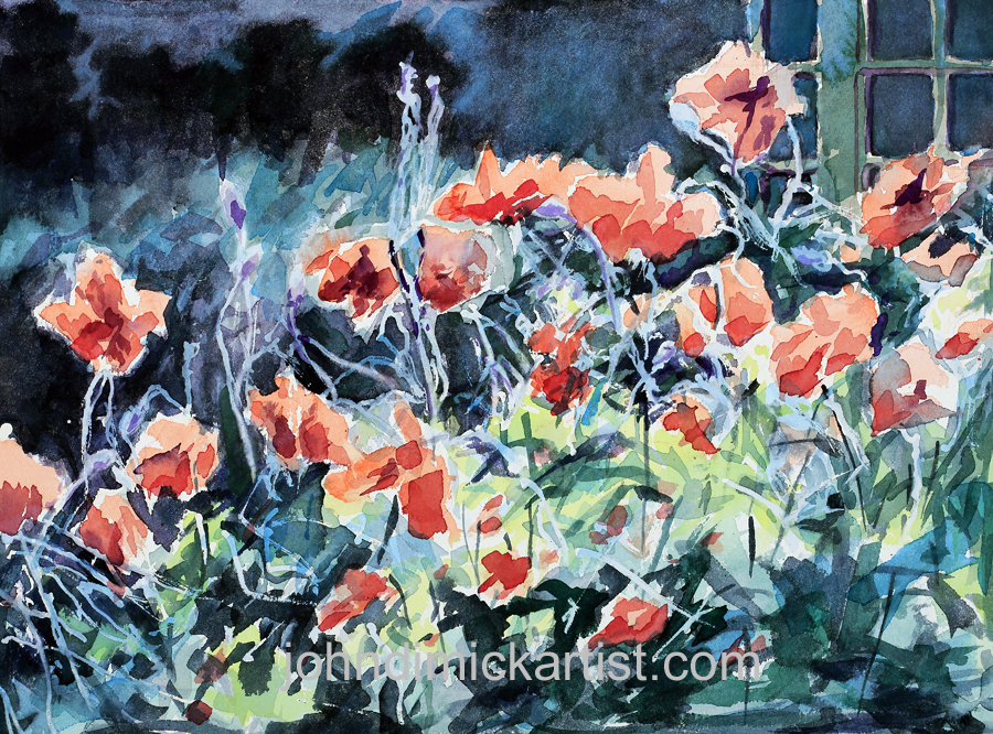 poppies at dusk